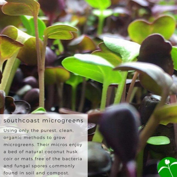 southcoast-microgreens