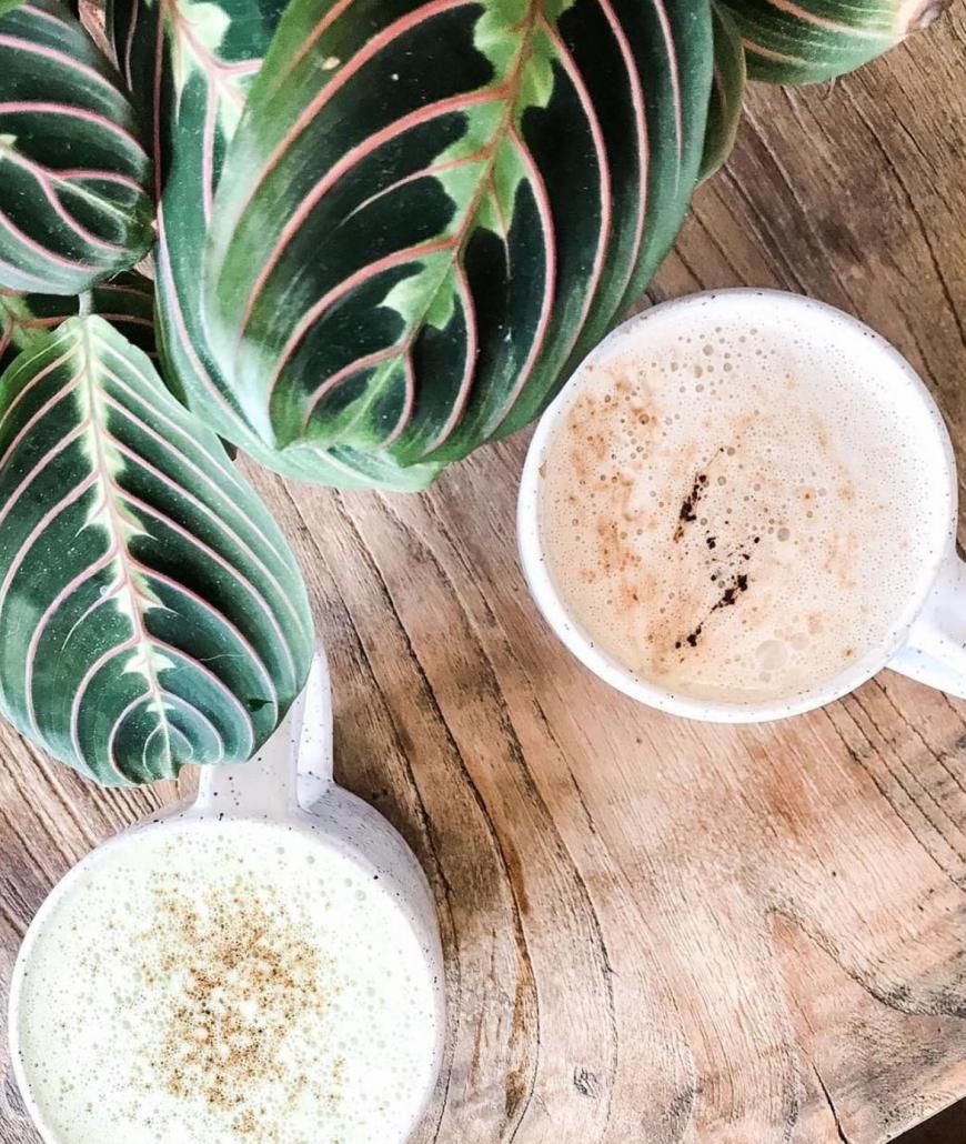 dandy-latte-organicetree